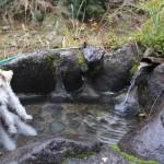 伊豆の犬猫温泉