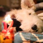 エルモ12歳の誕生日